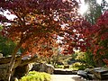 Autumn colour in Chatsworth Gardens (geograph 5925901).jpg