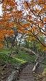 Autumn season in Butanic Garden فصل پاییز در باغ بوتانیکال تفلیس 09.jpg