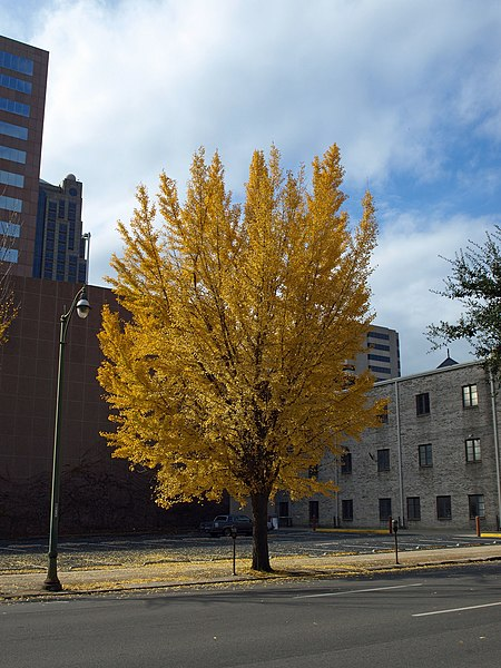 File:Autumn tree in Birmingham Nov 2011.jpg