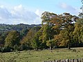 Autumn trees - geograph.org.uk - 1522337.jpg