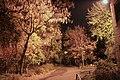 Autumn under the lantern - panoramio.jpg