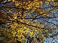 Autunno - autumn - jesień - otoño (11798885356).jpg