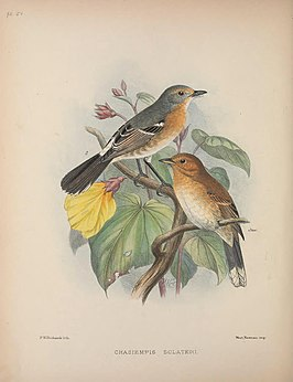 Aves Hawaiienses (Pl. 51) (8464085031).jpg