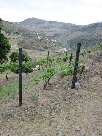 Alijó - The vineyards along the terraced hilltops of Alijó