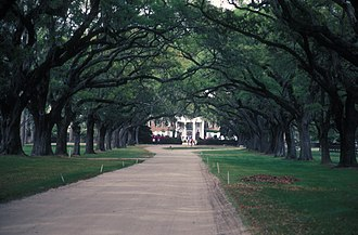 Boone Hall - The Avenue of Oaks