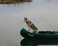 Balder i båt (856867299).jpg