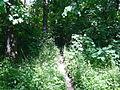 Banjička šuma 004.jpg