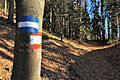 Bannwaldweg 8 in Poertschach Markierung 29112013 337.jpg