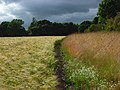 Barley, Chaddleworth - geograph.org.uk - 891560.jpg