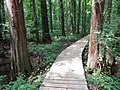 Battle Creek Cypress Swamp 52.jpg