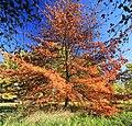 Baum am Schwanenteich in Waldenburg. 2H1A6034WI.jpg