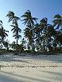 Beautiful Palm trees by the sandy white beach.jpg