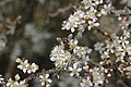 Bee - panoramio (1).jpg