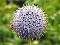 Bee on flower by Keven Law.jpg