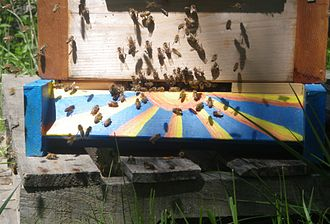 Beekeeping - Bees at the hive entrance
