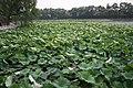 Beihai Park (9868789065).jpg