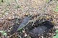 Betonplatte - panoramio.jpg