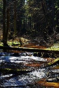 Bezdonė Bezdonių miške (3).JPG