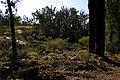 Bibbulmun track 01 gnangarra.JPG