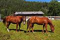Biberwier - horses.jpg