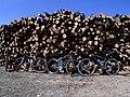 Bicicletes i troncs tallats als Ports.jpg