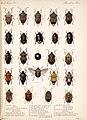 Biologia Centrali-Americana (8272529098).jpg