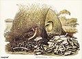 Bird illustration by Elizabeth Gould for Birds of Australia, digitally enhanced from rawpixel's own facsimile book245.jpg