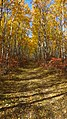 Birds Hill Provincial Park, Manitoba - panoramio (24).jpg
