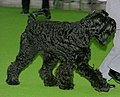 Black Russian Terrier.jpg