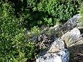 Blick nach unten vom Ruckenkreuz - panoramio.jpg