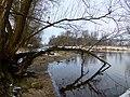Blick zur Elbinsel Pillnitz vom kleinzschachwitzer Ufer aus.jpg