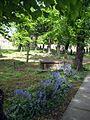 Bluebells - geograph.org.uk - 1294571.jpg