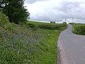 Bluebells near Llwynllwyd, Breconshire - geograph.org.uk - 442638.jpg