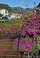 Blumen verschönern die Flußbetten in Santa Cruz, Madeira.jpg