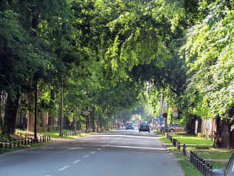 Celtis occidentalis - One of the streets with 'bođoš' in Sombor, Serbia