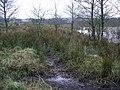 Bog, Castle Loch - geograph.org.uk - 325272.jpg