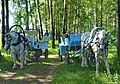 Bogolubovo, forest - panoramio.jpg
