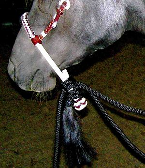 Bosal - An intermediate-level rawhide bosal on leather headstall, showing attached mecate of synthetic rope. No fiador.