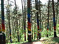 Bosque de Oma (10).JPG
