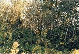 Bosque de albard%C3%B3n