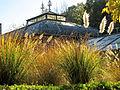 Botanička bašta Jevremovac, Beograd - jesenje boje, svetlo i senke 37.jpg