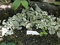 Botanička bašta Jevremovac 064.JPG