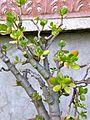 Botanični vrt (3990922416).jpg