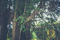 Botanisk Have (15722682788).jpg