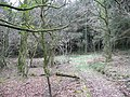 Bowdanoddon Wood-Hawk's Wood - geograph.org.uk - 715852.jpg