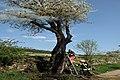 Brandeisatz Baum Flur Böschung (41567106411).jpg