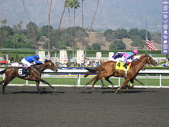 Marathon Stakes - The 2009 Marathon, won by Man of Iron (almost hidden on the rail) by a nose