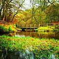 Bridge, Dam, Pond in Wade Wood - panoramio.jpg