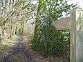Bridleway Past Straits Inclosure - geograph.org.uk - 352654.jpg