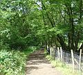 Bridleway heading towards Waggoners Farm, Near Crawley, West Sussex - geograph.org.uk - 31306.jpg